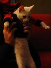 gato jersey