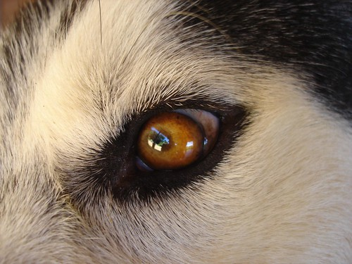 the dog`s eye.