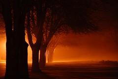 Spooky lights (Jan Lukac) Tags: christmas light tree night abigfave aplusphoto diamondclassphotographer superhearts theunforgettablepictures photofaceoffwinner platinumheartaward exquisiteimage alemdagqualityonlyclub alemdaggoldenaward