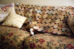 camo (Keli Schimelpfenig) Tags: dog beagle puppy shelby jackabee