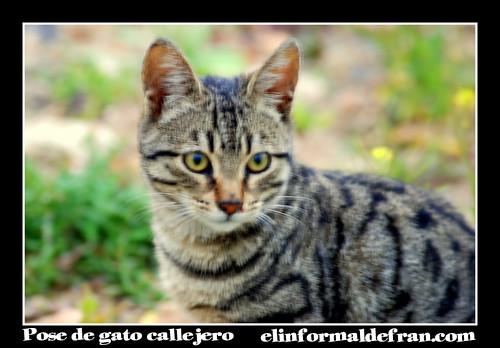 pose de gato callejero