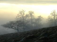 Hill of Loyal, Perth and Kinross (Shandchem) Tags: blueribbonwinner perthandkinross hillofloyal