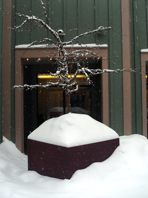 tree planter in snow, Park City, Utah