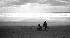 bretagna 1994. dia (gianluca zanaboni) Tags: dia veterinarifotografi
