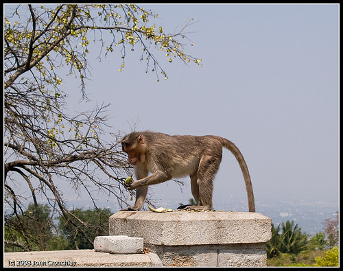 Monkey in the temple grounds