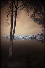 A tree by the reservoir bank (Elf-Y) Tags: tree reservoir infrared