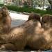 Los Angeles Zoo 044