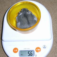 2008/03/16 コーキの体重