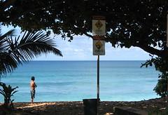 Checking it Out (AH in Pgh) Tags: ocean blue man beach water hawaii looking oahu surfer pacificocean palmtree banzaipipeline ehukaibeachpark