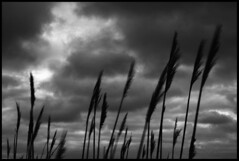 Just Between Me And The Wind (Sartori Simone) Tags: italien blackandwhite bw italy clouds geotagged europa europe italia nuvole wind bn italie biancoenero vento veneto allrightsreserved lagunaveneta giovanniallevi codevigo simonesartori vallemillecampi platinumheartaward casonedellesacche fotopoetiphotopoetry