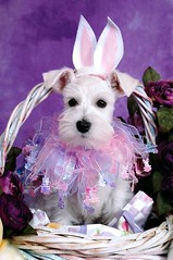 Sophie Easter Pup