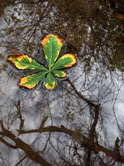 Reflejo otoal (Errlucho) Tags: hoja agua colores reflejo otoo