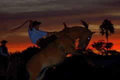Domando ao entardecer (Eduardo Amorim) Tags: sunset brazil horses horse southamerica brasil caballo cheval atardecer caballos bravo tramonto sonnenuntergang prdosol cavalos pferde cavalli cavallo cavalo gauchos pferd riograndedosul pampa poniente anoitecer coucherdesoleil hest hevonen campanha brsil chevaux gaucho entardecer crepsculo  amricadosul poente bag fronteira hst gacho  amriquedusud  gachos  sudamrica suramrica amricadelsur  sdamerika jineteada   americadelsud gineteada  americameridionale eduardoamorim