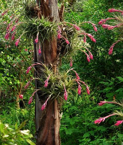 flores tropicais jardim:Florbeta: JARDIM TROPICAL