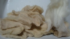 Buckthorn dyed wool