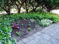 Shoshanna's Garden