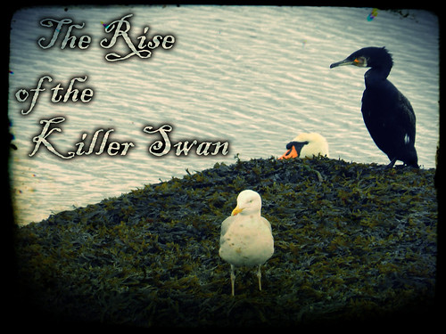 The Rise of the Killer Swan