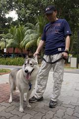 husky and pet