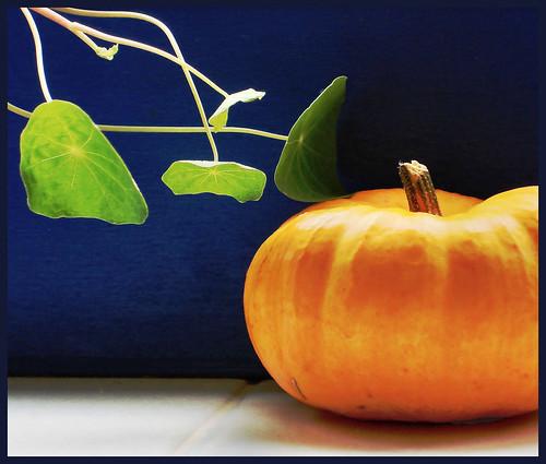 October kitchen windowsill
