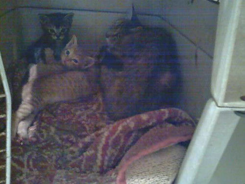 Olivia's Kittens