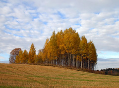 Autumn Wallpaper (Steffe) Tags: autumn fall07 sterhaninge trees field color haninge sweden moopostcard swedishcalendar 2010calendar fall nature grove canon fallfoliage hst utstllning