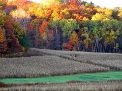 Nature's Spotlight (akahodag) Tags: autumn fall sunrise crops naturesfinest blueribbonwinner 5for2 platinumphoto aplusphoto diamondclassphotographer flickrdiamond theperfectphotographer
