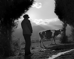 Cow (mexadrian) Tags: china blackandwhite mountains film field cow trix 6x7 dali 67 plaubel makina