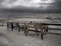 waiting with the ponies (zachstern) Tags: wallpaper sky cloud water girl canon ir pony infrared infravermelho infrarot  ircamera infrarrojos   infrapuna infrarood infrarouge infrarossi mywinners  s30ir anawesomeshot  ysplix inframerah   waitingwiththeponies infravrs infraerven
