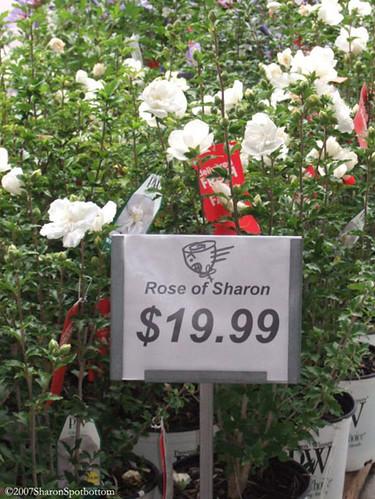roseof_sharon