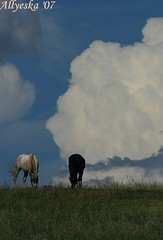 Look out behind you! 28/11/07 (Allyeska) Tags: summer sky horses horse white storm rain weather clouds spring australian dramatic fluffy australia cumulus canberra finest natures cumulonimbus cumulous naturesfinest weatherphotography