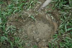 Kesan tapak gajah dan ni la tempat tidurnya (amir12m13) Tags: gunung bintang xpdc