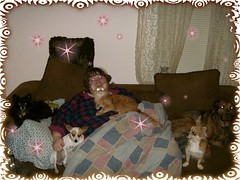 All of Us (almostanangel) Tags: family pets home animals stars tink precious poppy barb trixie specialeffects christmas2007 kyno