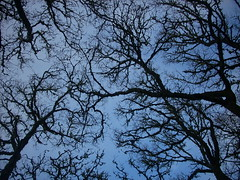 Branching out (Mazetta) Tags: blue sky black tree nature forest scotland woods branches highland pitlochry blackspoutforest