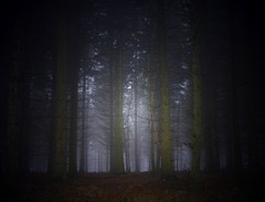 follow me  .... into the forest (algo) Tags: trees light misty fog forest photography se topf50 bravo topv1111 topv999 topv222 algo topf100 100f littlestories 50f 200750plusfaves superbmasterpiece thperfectphotographer picswithsouls searchthebestnew