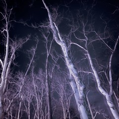 (parade in the sky) Tags: longexposure trees sky up alberi night nightshot blu branches wideangle 1020mm viola notte rami foothillcollege