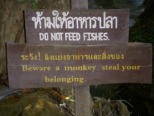 Cuidado con los monitos