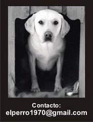 contacto perro1970