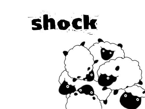 shock  sheep
