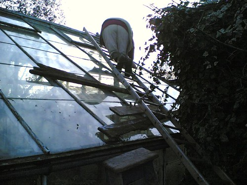 Ma on greenhouse roof