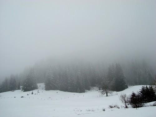 Bosco con nebbia 2
