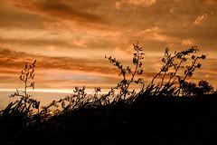 Waiinu: 8.2.2017 at 19:24h (m+m+t) Tags: dscf36821 mmt meredithbibersteindesign newzealand northisland taranaki waiinubeach coast sky evening sunset clouds silhouette trees fujixt1 fujixseries fujimirrorless 1855mm windy gale wild storm outdoors landscape