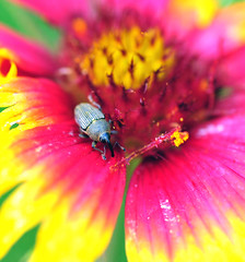 Weevill On Wild Flower (jwinfred) Tags: plants macro nature mississippi nikon insects delta cypress 90mm preserve greenville d300 tamrom