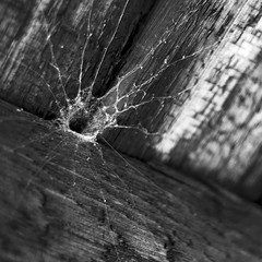 spiderweb (justB!) Tags: wood bw white black london nature closeup fence garden square 50mm spider nikon web crop nikkor trap d60 nowater noglass bsquare