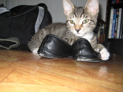 buster in shoes