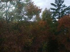 View from Kaminski Bros. window
