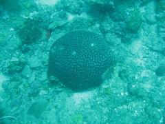 IMG_2519 (dcgreer) Tags: malaysia pulau redang pulauredang