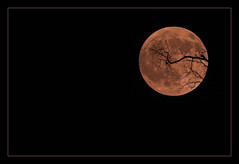 Smoke Tinged Halloween Moon (peasap) Tags: california ca shadow sky moon black tree halloween silhouette night canon dark eos october branch sandiego smoke elcajon luna full fullmoon 300mm colored fires 31st happyhalloween halloweenmoon 30d themoon allhallowseve blueribbonwinner october31st halloweenpics halloweensky darkhalloween supershot spookymoon october2007 anawesomeshot halloweenwallpaper frhwofavs halloween2009 sandiegowildfires halloweenpicture moonhalloween halloweenfullmoon darkhalloweenwallpaper halloween2010 halloweennightsky october2012 happyhalloweenwallpaper halloween2012 spookymoonphoto