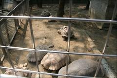2007國旅卡DAY4(壽山動物園)008