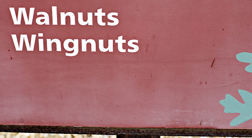 Walnuts and Wingnuts