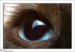Cats eyes (Haentjens Raphal - Macropixels) Tags: haentjens raphal macropixels macro macrophotographie macrophotography macrographie macrography closeup canon eos wwwphotomacrobe auge   ojo   occhio ogen olho ochi  ga excellent beautiful magical best magic stuning stunning wow